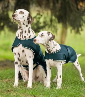 Regen-Hundedecke