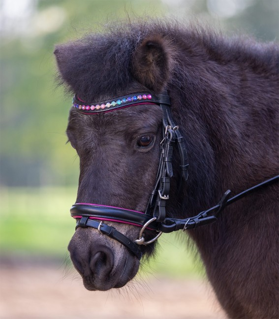 Pinky STAR Bridle