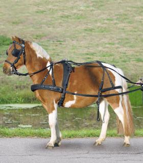 Harnais simple STAR chevaux et pur-sangs