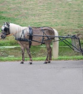 Arreos sintéticos para un caballo Economic, PON y SH