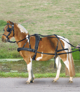 Arreos sintéticos para un caballo, VB y WB
