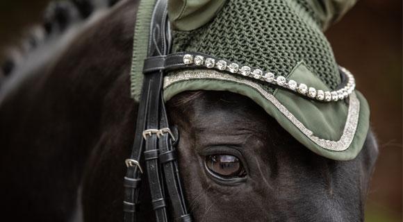 2er_Pferde